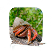 Hermit Crab Care 1.2