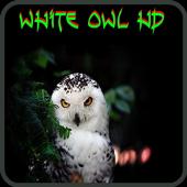 White Owl Wallpaper 1.0