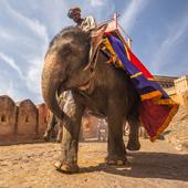 Amazing Elephant Wallpapers 1.0