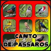 Canto de Passaros Brasil HD 1.1