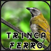 Canto de Trinca Ferro New 1.1