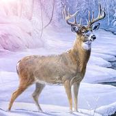 Archery Animal Hunter 1.0