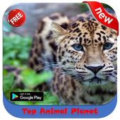 Top Animal Planet Ananta Studio