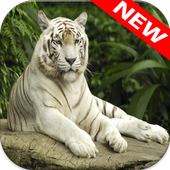 White Tiger Wallpapers 1.0