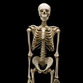 Human Anatomyap developersEducation