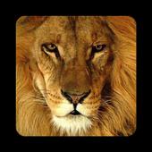 Angry Lion 3.0