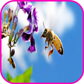 Bees Wallpaperpicture pollyPersonalization