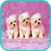 Puppy Dog Wallpaperpicture pollyPersonalization