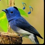 Bird Sounds & Ringtones 1.7