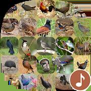 Appp.io - Bird Calls 1.0.6