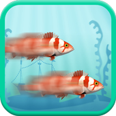 Two Crazy Fish Racing
