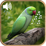 Latest Bird Ringtones 2019 5.0