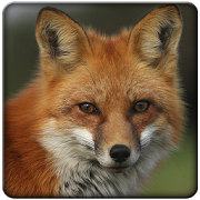 Sounds Fox 1.0