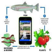 Aquaponics Guide Aquaculture 2.0