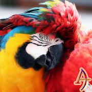 Xperien Theme Scarlet Macaw 1.0.1