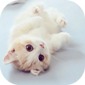 Cat Theme – AppLock 1.0.2