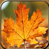 Autumn Wallpaper HD 1.2