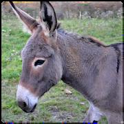 Donkey Sounds 1.0