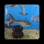 Fisheries  ornamental fish disease management 1.4