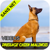 Dressage berger malinois 1.1