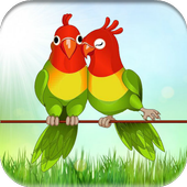 Parrot Games For Kids Free 1.0