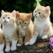 Cats And Kittens wallpaper