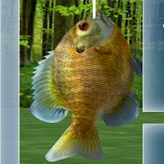 Fishing 3D 1.4.6