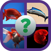 fish identifier game: identify fish and win coins 3.1.7z