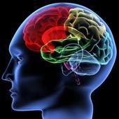 Beyin Yaşı 1.3