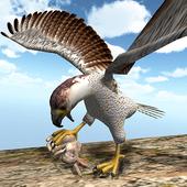 American Falcon Wild Sim 2016 2.0