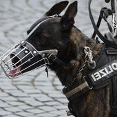 American Police Dog vs Robbers 1.8