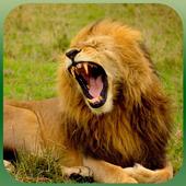 Life of A Lion 3D 1.8