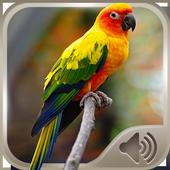 Bird Sounds 4.0