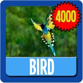 Bird Wallpaper HD Complete 1.0