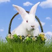 Rabbits Jigsaw Puzzles 1.0