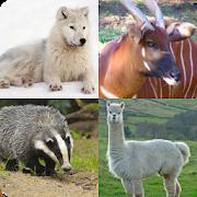 Animal Quiz 3.2.7z