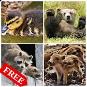 Мир животных free 1.4