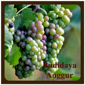 Budidaya Anggur 1.0
