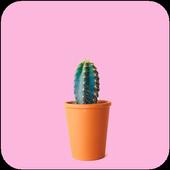 Cactus HD Wallpaper 1.03