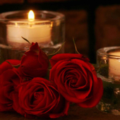 candle roses live wallpaper 10.02