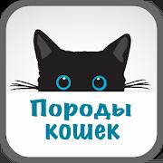 Породы кошек с фото 1.04
