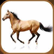 Horse Breeds Database 1.01