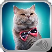 Cat Sounds Ringtones 2.0