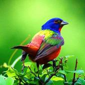 Colorful Birds Wallpapers 1.1