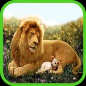 lion wallpaper 8.0.1