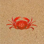 Crab Raced 1.0.0