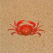 Crab Raced 1.0.0