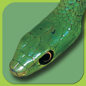 Snakes of Southern Africa Lite 1.0.1