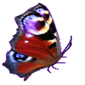 Flappy Butterfly 1.0