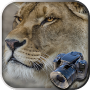 Hidden Animals game : Photo Hunt . Search Objects 1.1.000
